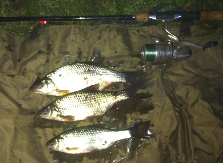A selection of Roach caught by Mike Linstead