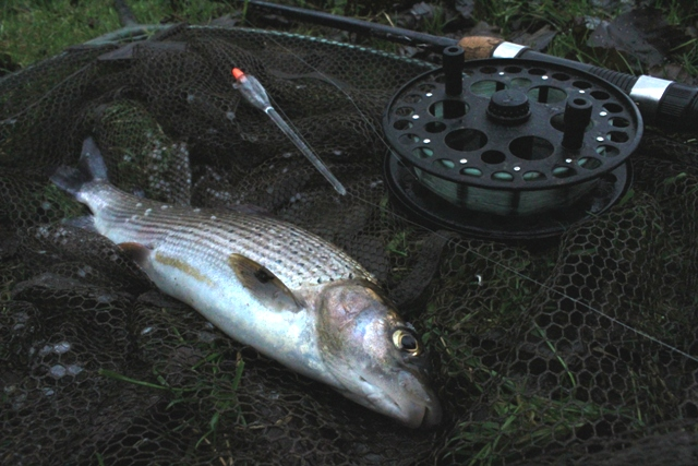 A River Rye Grayling caught by Mike Linstead